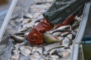 Waterproof bearings for the fishing industry